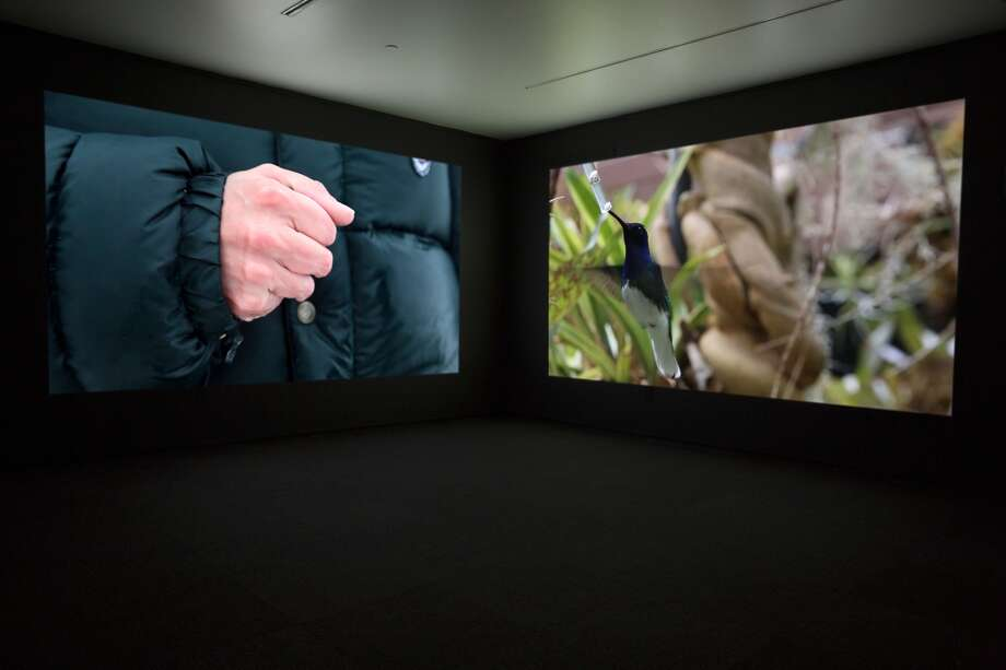 This is a production still from Janet Biggs' The Persistence of Hope, copyright 2014, a two-channel, high-definition video installation with sound. The Persistence of Hope focuses on the solace one of Biggs' relatives found in his residual memory of birds. Juxtaposing imagery of gravity-defying hummingbirds with footage shot in the Arctic and in neurological research laboratories–in particular of freezers preserving everything from simple worm cells to human brain cells, Biggs paints a picture of life caught between hope and futility. Photo: Courtesy Of The Artist,  CONNERSMITH,  And Galerie Analix Forever