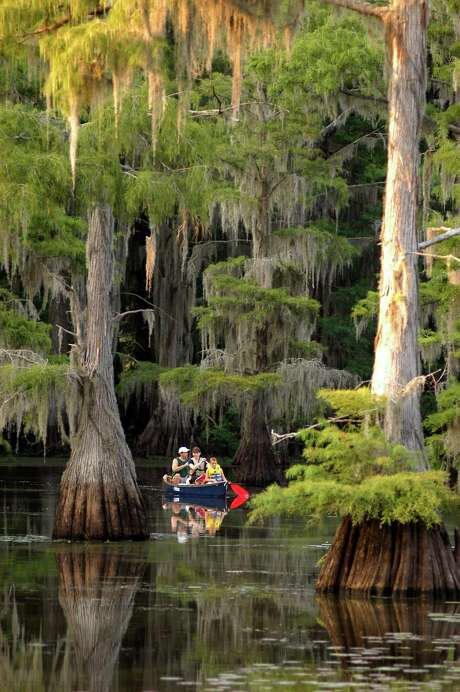 Caddo Lake State Park. (Texas Parks and Wildlife) / Handout CD