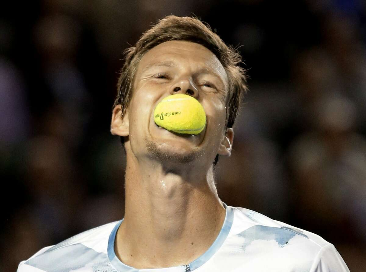 FETCH! GOOD BOY: Tomas Berdych bites into a ball like a Golden retriever during a tense semifinal match against Andy Murray at the Australian Open. Murray won in four sets.