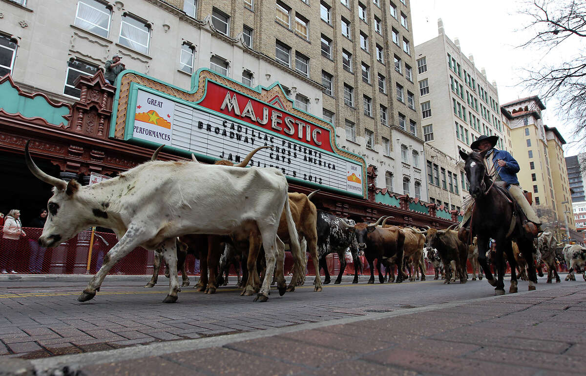 Local residents flock to the Houston Street each year to watch longhorn mosey down the street as part of the Western Heritage Parade and Cattle Drive that precedes the San Antonio Stock Show and Rodeo each year.