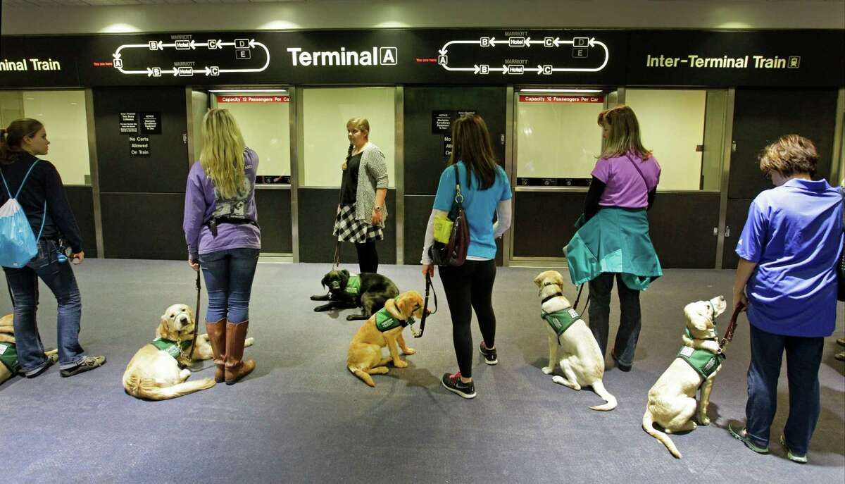 Members of Lone Star Guide Dog Raisers wait with dogs to board an inter-terminal train at George Bush Intercontinental Airport Saturday, Jan. 31, 2015, in Houston. The volunteer group raises puppies for Guide Dogs for the Blind. The event brought volunteers from clubs throughout Texas and was held to expose the dogs to the hustle bustle of the airport. As guest of Alaska Airlines the dogs and trainers went through security screenings and boarded a plane as part of their training.