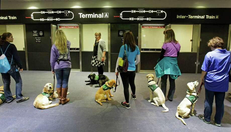 Members of Lone Star Guide Dog Raisers wait   with dogs to board an inter-terminal train at George Bush Intercontinental Airport  Saturday, Jan. 31, 2015, in Houston. The volunteer group raises puppies for Guide Dogs for the Blind. The event brought volunteers from clubs throughout Texas and was held to expose the dogs to the hustle bustle of the airport. As guest of Alaska Airlines the dogs and trainers went through security screenings and boarded a plane as part of their training. Photo: Melissa Phillip, Houston Chronicle / © 2014  Houston Chronicle