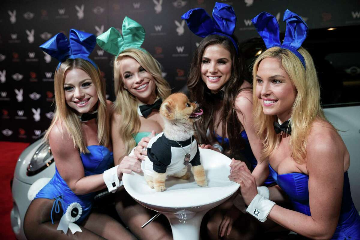 Playboy Playmates pose alongside celebrity dog Jiff Pom, center, on the red carpet at The Super Bowl Playboy Party January 30, 2015, at the W Scottsdale in Scottsdale, Arizona. Nelly hosted the A-list event, complete with open bars for attendees. Celebrities such as Kanye West, Usher, and Lil John have all made past appearances at the Super Bowl Playboy Party to perform live.