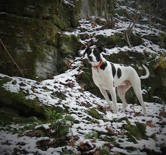 Ozzy strikes a pose as he hangs out with Mark Pasquariello, hiking and exploring the forests of That