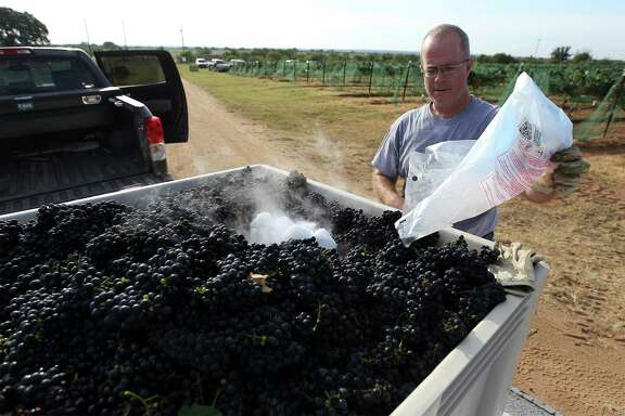 Chris Cobb of Kuhlman Cellars places dry ice into a bin of harvested Touriga Nacional grapes to keep them cool at Robert Clay Vineyards near Mason. , Texas on Saturday, Aug. 16, 2014. (Kin Man Hui/San Antonio Express-News)