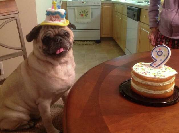 Brutus enjoys cake and Frosty Paws on his ninth birthday at the Clifton Park home of Mary Stokes. (Mary Stokes)