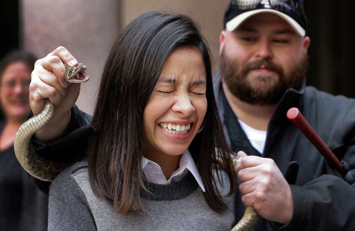 Lauren Cachbaux grimaces as she poses with a rattlesnake at the Capitol, Monday, Feb. 2, 2015, in Austin, Texas. Members of the Sweetwater Jaycees brought rattlesnakes to promote their annual rattlesnake round-up and help educate visitors.