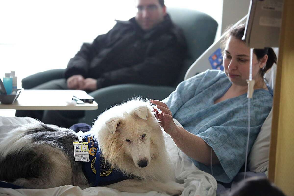 SIGN LANGUAGE DOG: At Langley Air Force Base in Hampton, Va., patient Rebecca Bennett-Jordan pets Lothair, a gentle canine whose owner claims is the first therapy dog to both understand and use American Sign Language. We're not exactly sure how Lothair signs - with his paws?