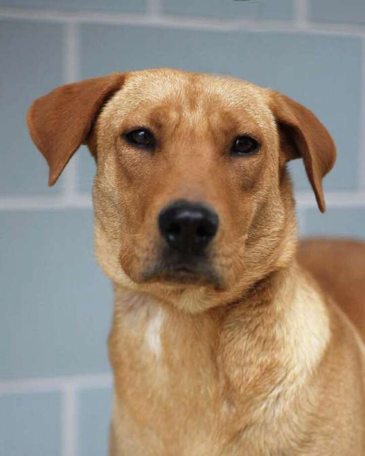 Cinderella can be adopted from Bulverde Area Humane Society Photo: Courtesy Photo / Courtesy Photo