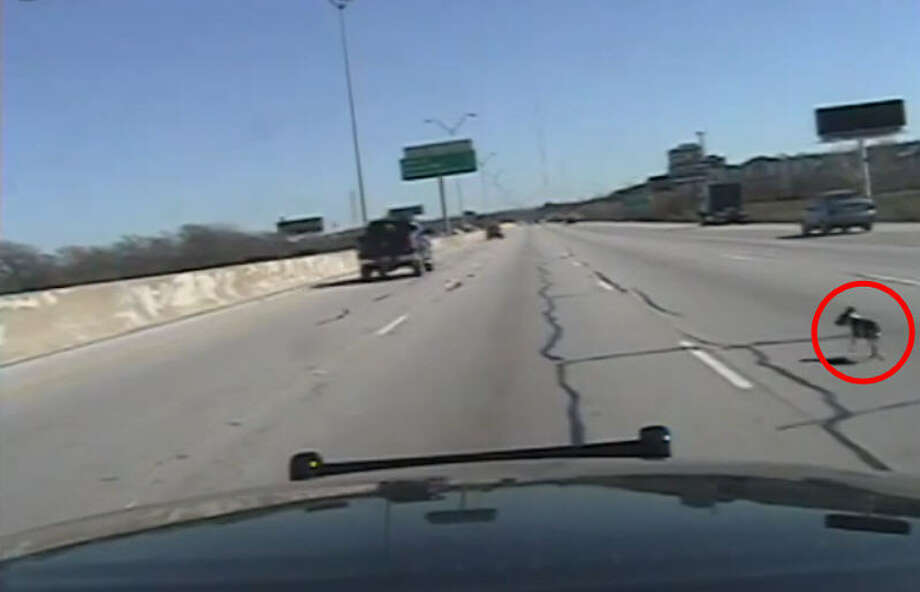 Two Fort Worth Police officers stop traffic on interstate 30 on Jan. 27, 2015 to rescue a small puppy lost on the roadway. Photo: Fort Worth Police