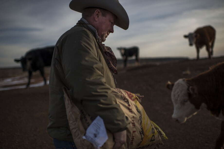 POST, TX - DECEMBER 11:  Sixth generation cattle rancher Mark Kirkpatrick feeds his yearly heifers on his  ranch, named the Stoker-Kirkpatrick Ranch, in Post, Texas on Wednesday, December 11, 2013.  Kirkpatrick is politically conservative --- believing less  government is better government. Photo: The Washington Post, Getty Images / 2013 The Washington Post