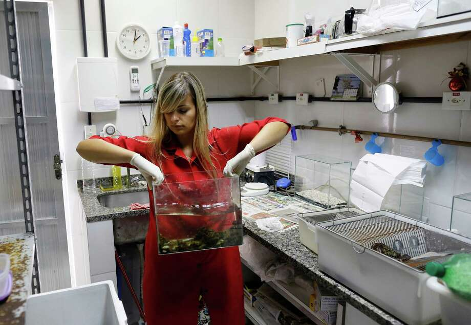 Brazilian researcher Marcela Uliano da Silva carries an aquarium with golden mussels at the Carlos Chagas Filho Biophysics Institute in Rio de Janeiro. The world's mightiest waterway, the Amazon River, is threatened by the tiny mussel from China. The golden mussel has claimed new territory at alarming speeds, plowing through indigenous flora and fauna as it has spread to waters in five countries. Photo: Leo Correa / Associated Press / AP