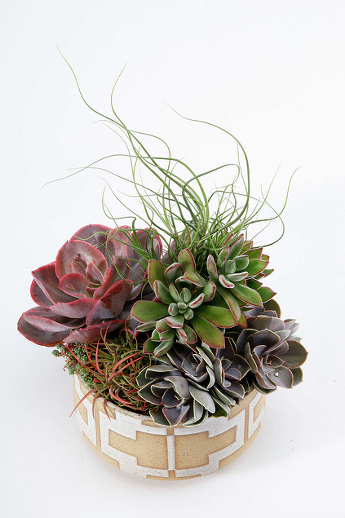 Show that your relationship can survive the drought. Give an artful, handmade succulent garden from Flora Grubb nursery instead of an average bouquet. Even better, visit the shop and make a long-lasting arrangement together while sipping Ritual Coffee from its in-store outpost. Prices vary by size and type. 1634 Jerrold Ave., S.F.; www.flora grubb.com