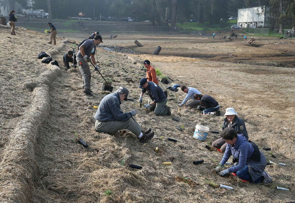Volunteers plant native vegetation for a restoration project at the Presidio in San Francisco.