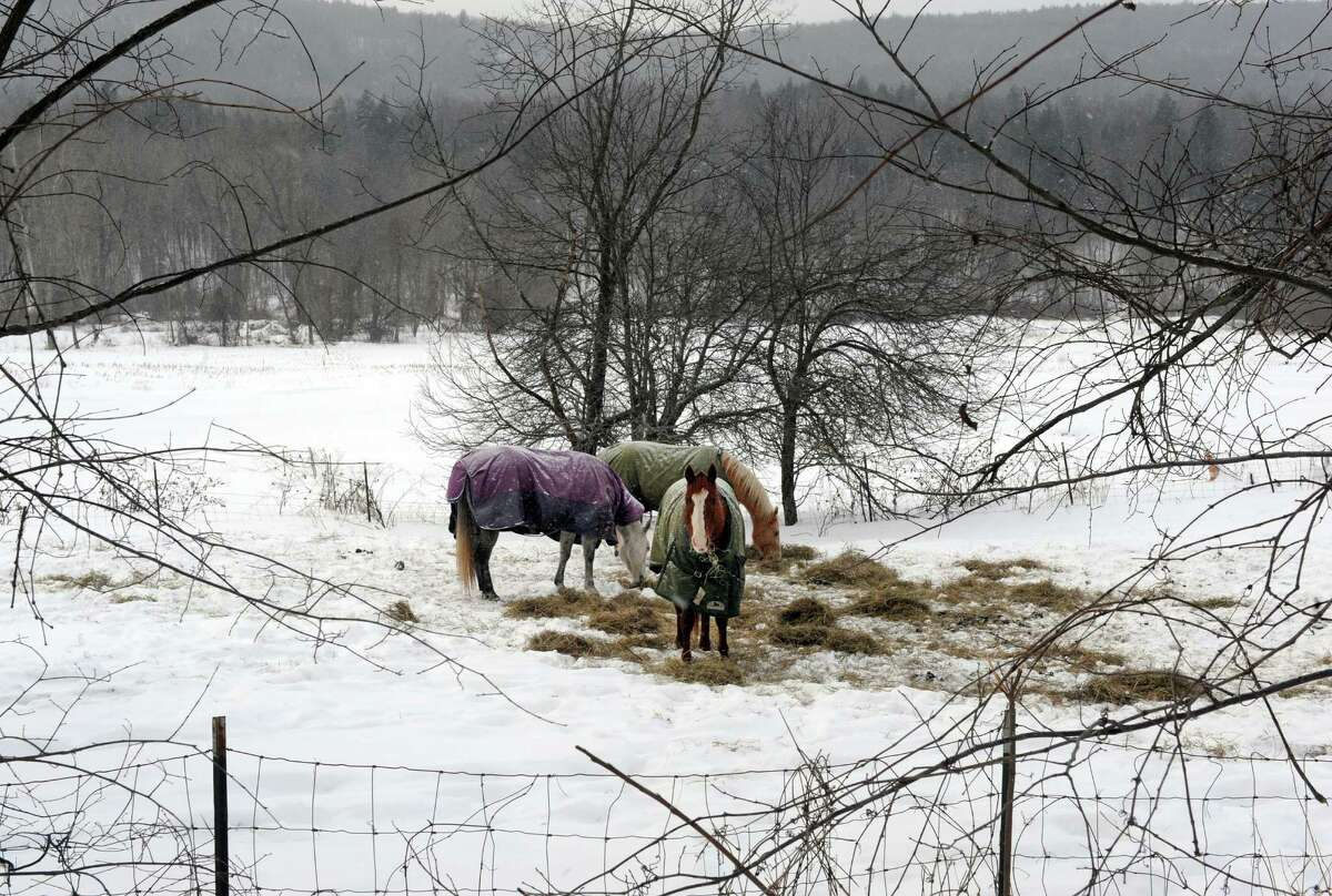 Horses graze in a farm pasture on Switzkill Road on Friday Feb. 6, 2015 in Berne , N.Y. (Michael P. Farrell/Times Union)