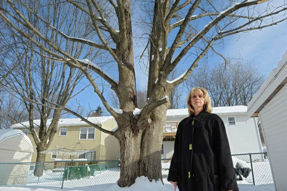 Mary Jo Occhialino stands in front of her backyard tree that she says is perfectly healthy, yet the city wants her to take it down Thursday, Feb. 5, 2015 in Albany, N.Y. (Lori Van Buren / Times Union) Photo: Lori Van Buren / 00030485A
