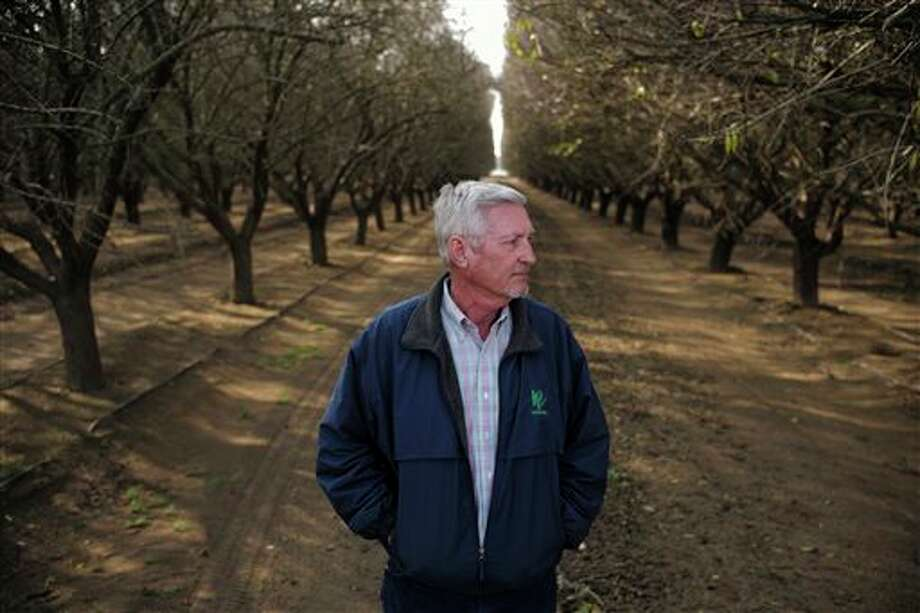 Fourth-generation farmer Mike Hopkins, of Palla Farms, poses for photos at his almond orchard Thursday, Jan. 15, 2015, in Bakersfield, Calif. Hopkins says damage from the oil-field injection into the aquifer forced him to pull up his cherry trees in 2013, and has filed suit blaming the oil companies whose fracking wells and other oil and gas installations ring his orchards. (AP Photo/Jae C. Hong) Photo: Jae C. Hong, AP / AP