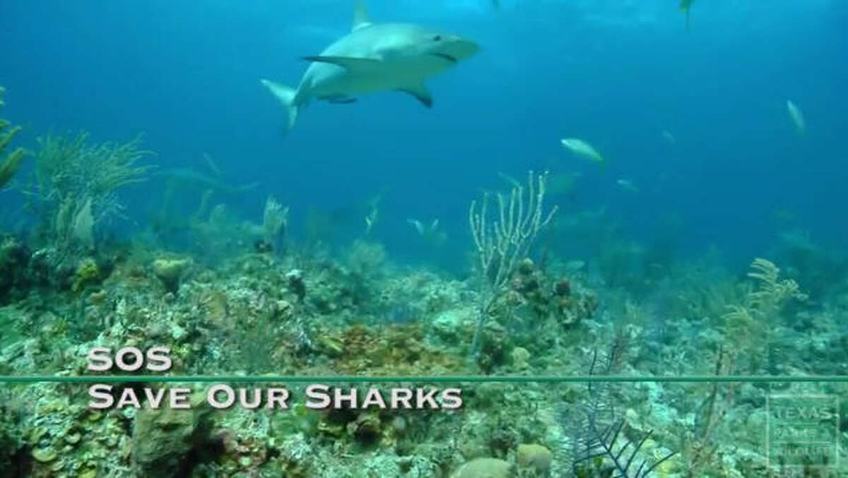 Save Our Sharks A new You'Tube video from Texas Parks and Wildlife tells how the department tags and tracks sharks every year in the Gulf of Mexico to monitor decline in the shark population.