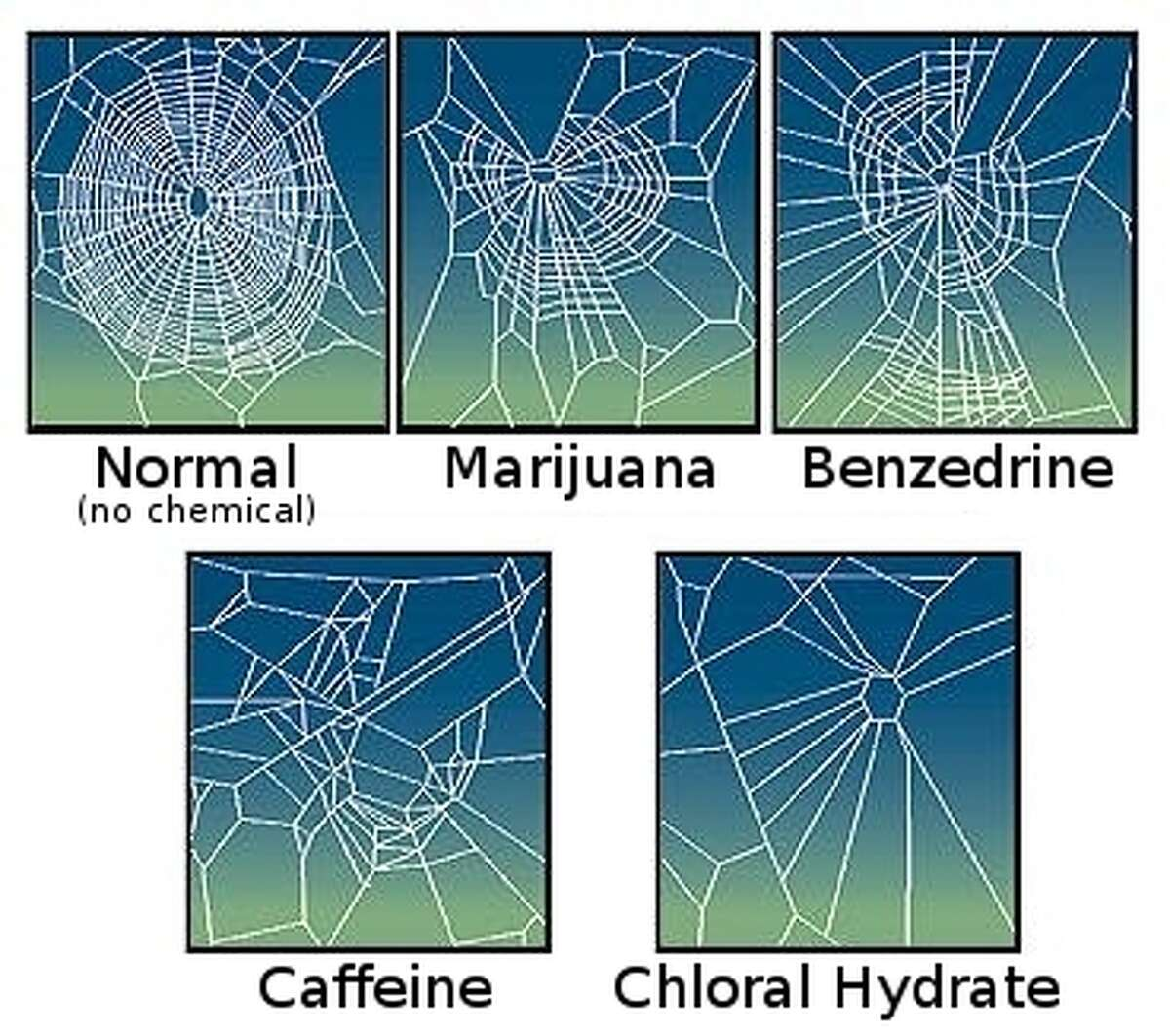 Giving spiders LSD  Repeating an experiment by a Swiss pharmacologist, NASA, in 1995, gave spiders caffeine, mescaline, LSD, marijuana and sleeping pills, and watched them weave their webs. The spiders on weed or sleeping pills failed to complete their webs. The caffeinated spiders completed their webs faster, but in a disorganized fashion with large gaps in the design. The spiders on LSD actually completed their webs with more geometric regularity than if they had remained stone-cold sober.