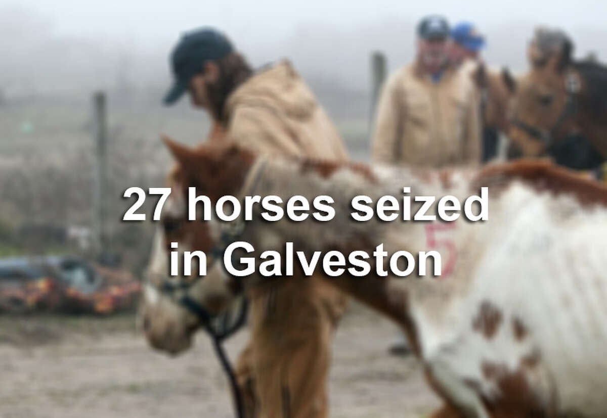 Galveston woman Terri Glenn is facing charges of cruelty to livestock animals after police on Wednesday seized 27 horses from a pen used by a riding business.