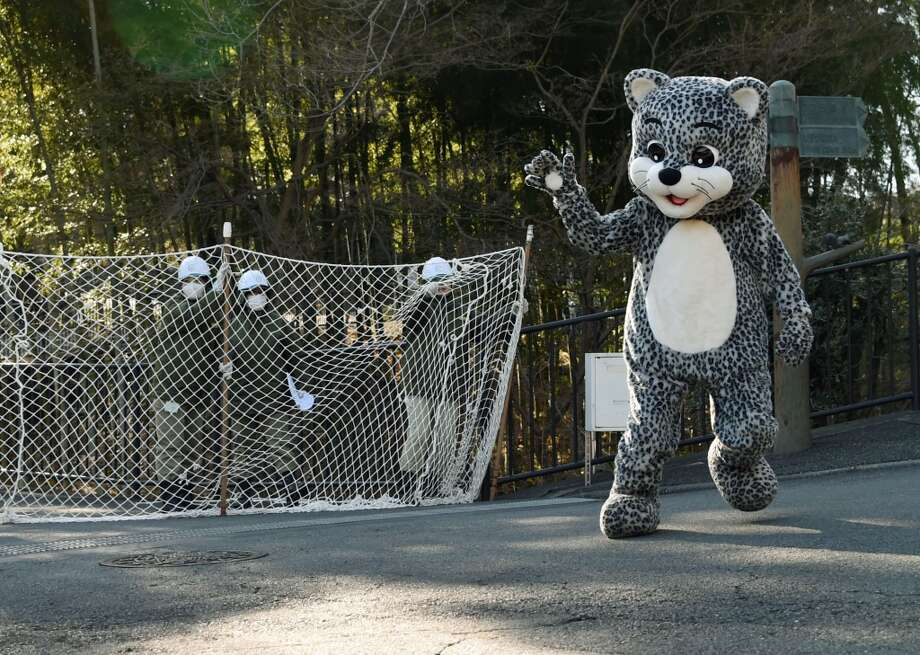 A zoo employee dressed in a snow leopard costume takes part in a drill to practice what to do in the event of an animal escape at the Tama zoo in the western suburb of Tokyo on February 10, 2015. About 70 zookeepers participated in the annual drill. Photo: TOSHIFUMI KITAMURA, AFP / Getty Images