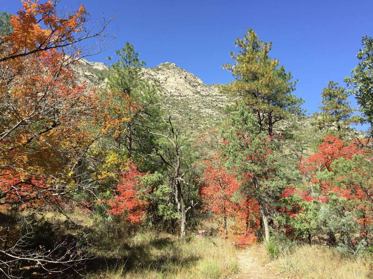 Chronicle reader Melanie Miller of Richmond submitted this vacation photo taken in Guadalupe National Park