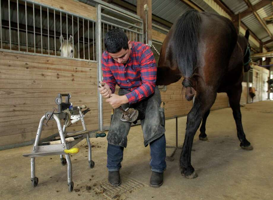 Eduardo Beltran,  owner of Gold Buckle Farrier Service a mobile farrier service, works to shoe a horse at the Ravenwood Equestrian Center, 3922 Quail Run Drive, Friday, Feb. 6, 2015, in Pearland.   ( Melissa Phillip / Houston Chronicle ) Photo: Melissa Phillip, Staff / © 2014  Houston Chronicle