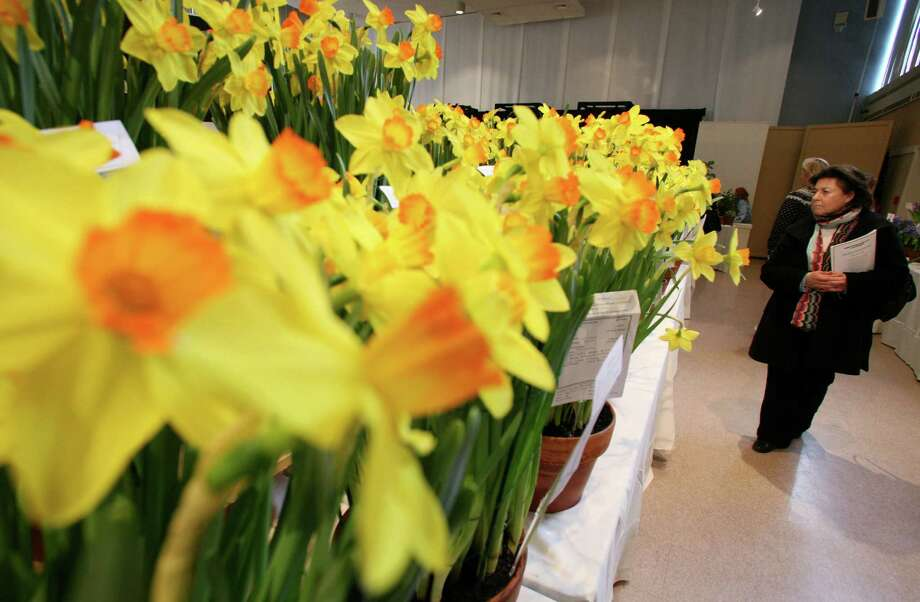 Nora Galland, right, of Hastings-on-Hudson, N.Y., walks past a table full of narcissus flowers during the first day of the Green Fingers Garden Club of Greenwich, Conn., flower show at Christ Church Parish Hall Friday, Mar. 2, 2012. The event, which takes place every three years, returns Feb. 27 and 28, 2015 to Christ Church. Photo: David Ames / Greenwich Time