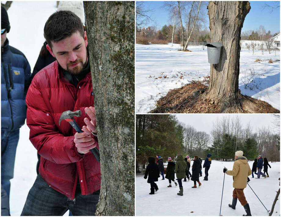The Connecticut Land Trust is holding a maple tapping and winter walk from 1 to 3 p.m. March 3 at its American Chestnut Sanctuary across from 18 Burning Tree Road. Non-members $25, members $15, children under 12 free. Registration and information: www.gltrust.org. Photo: Contributed Photo / Greenwich Time Contributed