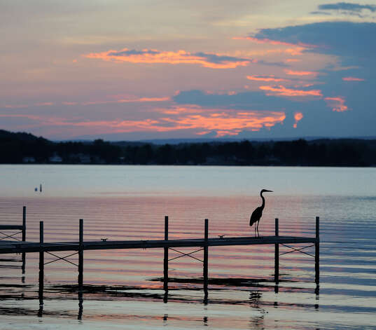 A bird sits on a dock on Saratoga Lake in Stillwater, New York last evening July 20, 2010.         (Skip Dickstein/Times Union) Photo: Skip Dickstein / 2008