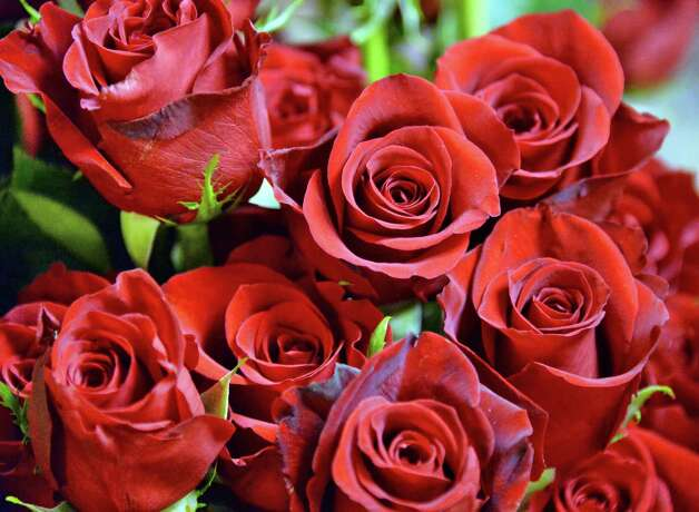 Roses ready for Valentine's Day at Emil J. Nagengast Florist Thursday Feb. 12, 2015, in Albany, NY.  (John Carl D'Annibale / Times Union) Photo: John Carl D'Annibale