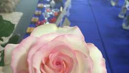 A bloom from Eddie Garcia's Moonstone rose won top honors at a San Antonio Rose Society show last year. Moonstone is a hybrid tea that performs well here.