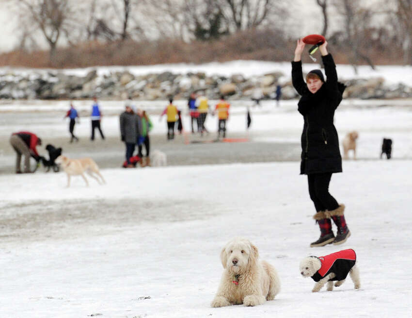 Dogs and their human companions enjoy the beach at Greenwich Point Park, Conn., Saturday, Feb. 14, 2015. Dogs are allowed into Greenwich Parks from December 1st through March 31st.