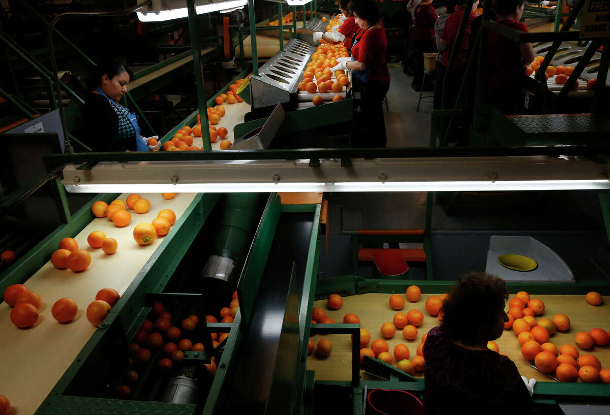 Employees sort oranges at a Sun Pacific Shippers and Farming packing facility in Exeter (Tulare County).