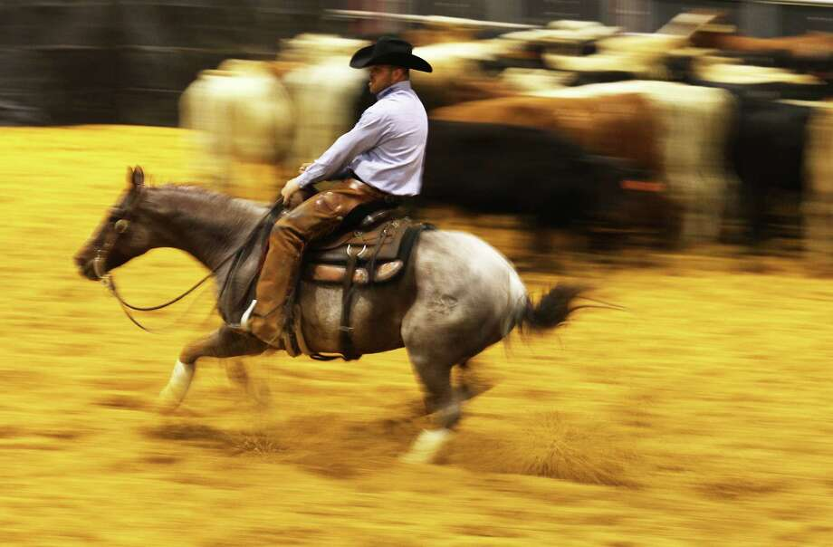 Steve Oehlhof, riding SDP Locked N Loaded, chases after a calf in a round of cutting horse competition at the 2015 San Antonio Stock Show & Rodeo on Saturday, Feb. 14, 2015. Oehlhof was competing in the Mercuria/NCHA World Series Open. The finals will be on Sunday. Photo: Kin Man Hui /San Antonio Express-News / ©2015 San Antonio Express-News