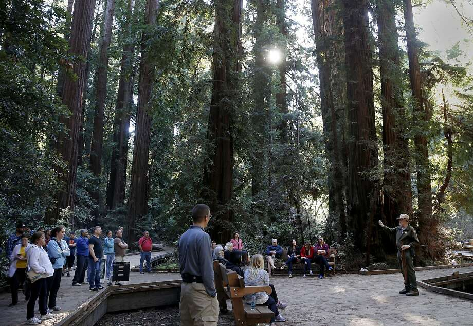 Visitors listened to a ranger talk about the history of Muir Woods at Bohemian Grove Sunday February 15, 2015.  Photo: Brant Ward, The Chronicle