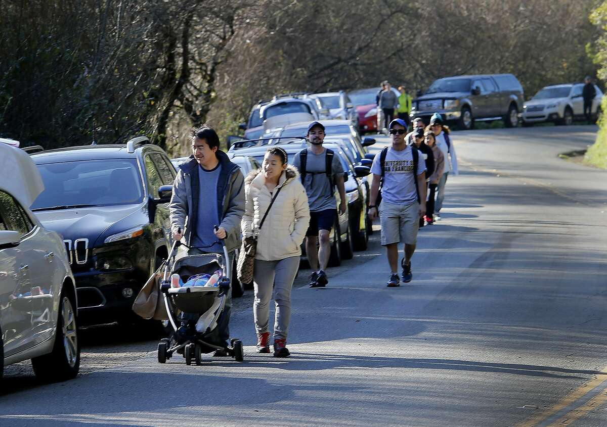 Many parked or looked for parking on Muir Woods Road and walked to the main gate of the park Sunday February 15, 2015. Admission is free this holiday weekend at all national parks including Muir Woods in Marin County. Parking, as usual, was the biggest problem for visitors to the woods.