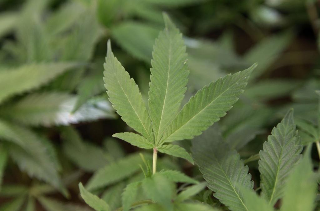 Medical marijuana in Texas: 'The wind is shifting'