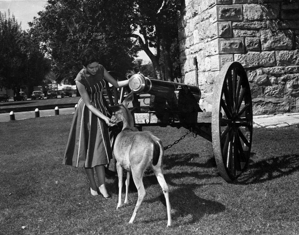 In this undated photo at Fort Sam, a visitor pets the deer in the Quadrangle.