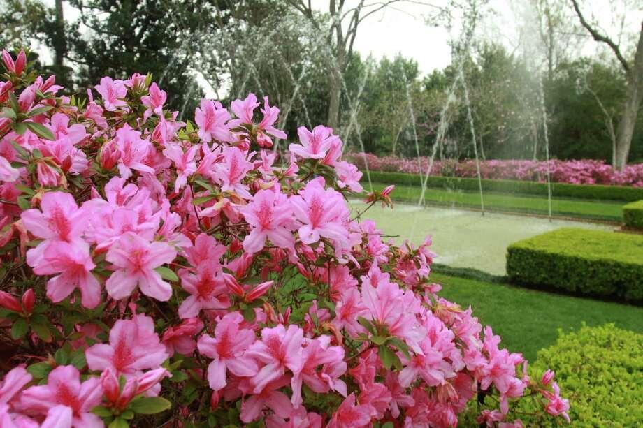 Azaleas bloom at the Diana Garden at Bayou Bend Gardens. Photo: Gary Fountain, Freelance / Copyright 2014 Gary Fountain.