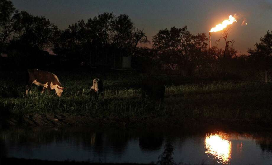 Cattle roam next to a pond at dusk as a flare burns off excess gas at a nearby oil well on the outskirts of Karnes City, Texas. (Kin Man Hui/San Antonio Express-News) Photo: Kin Man Hui,  Staff / San Antonio Express-News / ©2014 San Antonio Express-News
