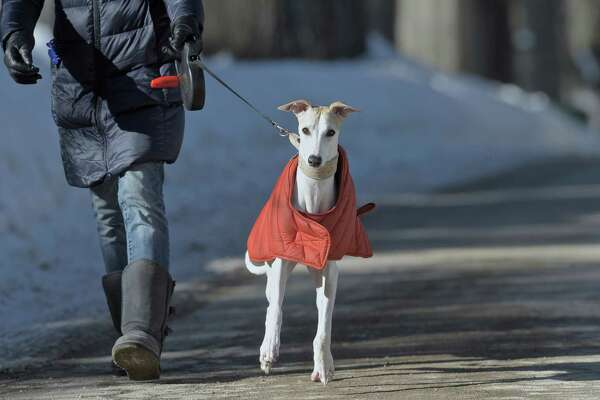 Yuki Turk, of Danbury, walks her daughter Hannah's dog, Starkey, on Friday afternoon, February 13, 2015. Both Turk and Starkey, a whippet, were dressed for the cold in down jackets, Starkey's is from LL Bean.