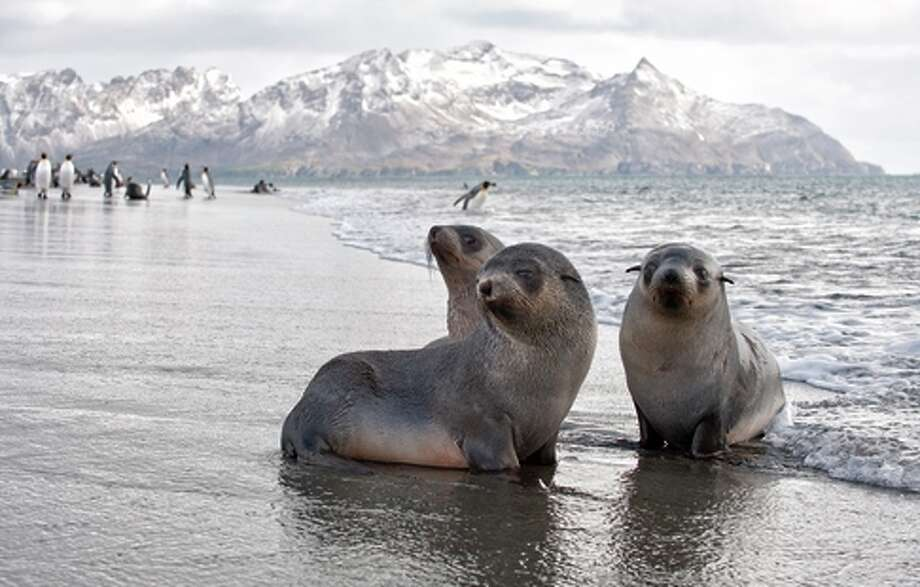 Adventure Life's Antarctica Air Cruise combines a flight over Drake Passage from Argentina with a cruise highlighting the region's unique wildlife. Photo: Webguzs / Adventure Life / ONLINE_YES
