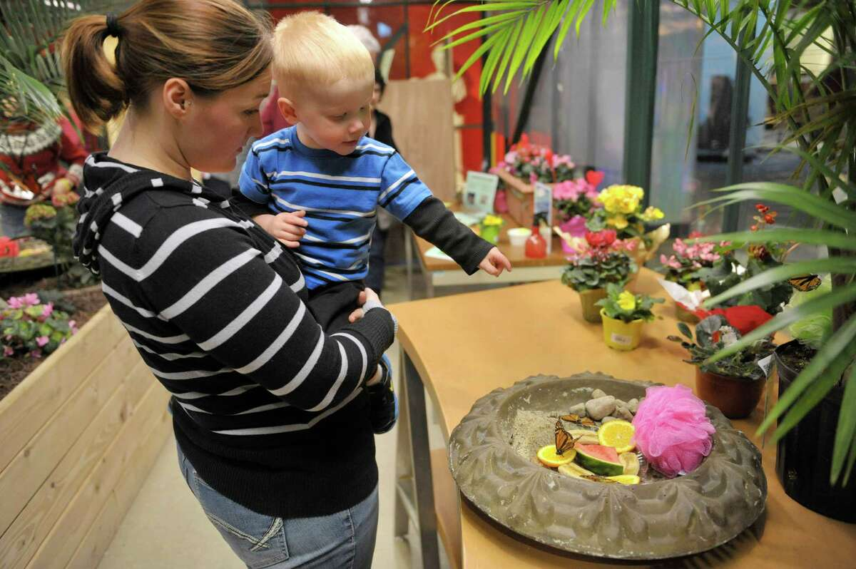 Victoria Haig and her son Dylan, 2, from Cherry Valley look over the butterflies at the butterfly house inside the MiSci, the Museum of Innovation and Science on Monday, Feb. 16, 2015, in Schenectady, N.Y. The butterfly house is open through April 19th. (Paul Buckowski / Times Union)
