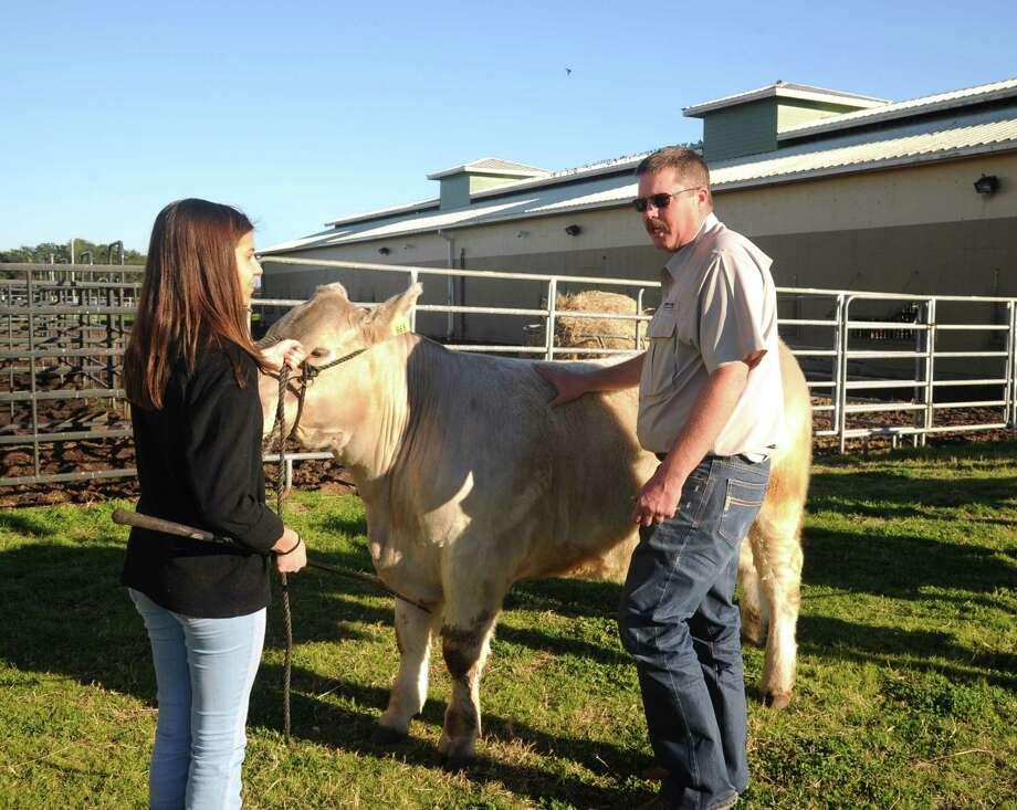 "Cinco Ranch FFA instructor Dean Fuchs explains the judging procedure to Megan Atkinson, Cinco Ranch junior, who raised her steer ""Bubba Gump."" Photo: Eddy Matchette, Freelance / Freelance"