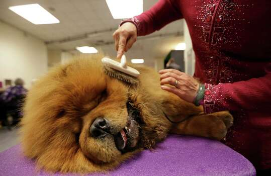 Chow ChowAverage price: $900Tier: Lowest degree of working/Obedience intelligence Photo: Mary Altaffer, AP / AP