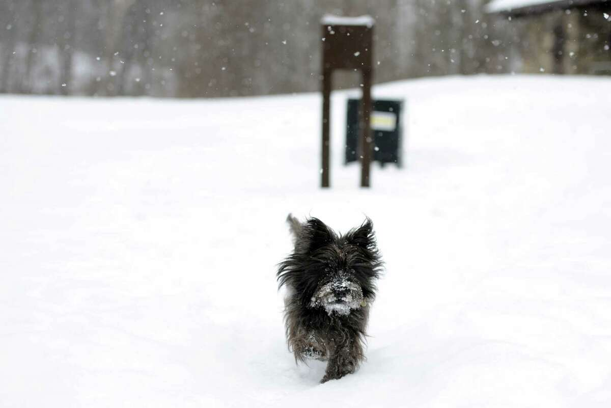Never leave a pet outside during a snowstorm for longer than you would want to be out there with them. If its too cold for you, its too cold for your pet. Source: ASPCA