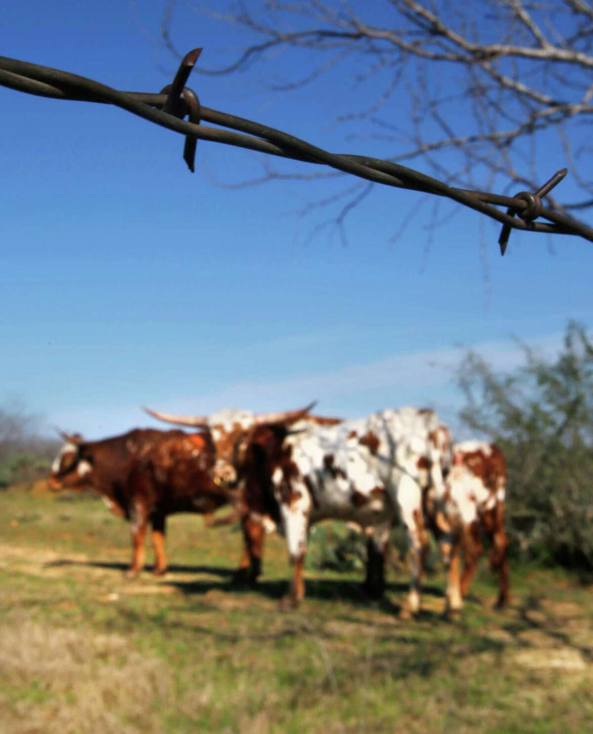 Barbed wire fences surround ranches and pastures across Texas. This one was spotted in south Bexar County.
