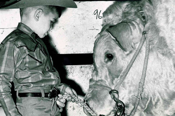 Sirman Hollabaugh, 4, of Corrigan, takes a close-up look at a bull at the 1965 Houston Livestock Show and Rodeo.