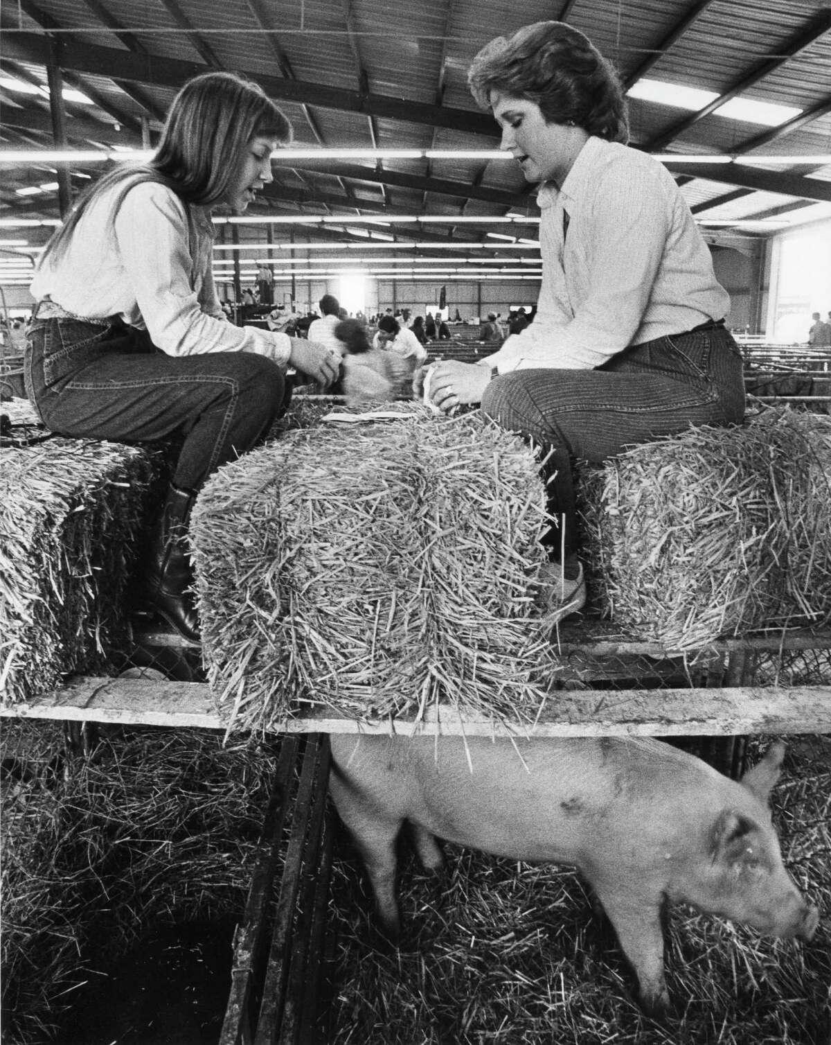 1985: Carrie Stieler and Jamie Jenschke play slapjack in the swine barn.